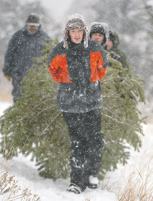 Dylan McEvoy helps carry a harvested Christmas tree to the truck after hiking the mountainside for the perfect family tree, near the Five Springs Campground in the Bighorn National Forest. Members of St. John's Episcopal Church gather at the campground every year to harvest Christmas trees and enjoy nature as a group.