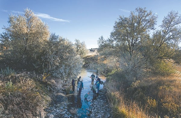 Volunteers work a deep hole in the Cody Canal near Wyo. Highway 120. Fish, including prized trout species, move to the deeper pools as the water in the canals is turned off at the end of harvest.