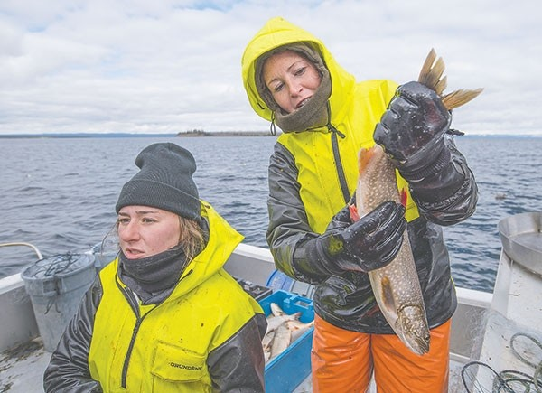 Taylor Preul and Megan Davenport check a lake trout near a spawning site in Yellowstone Lake last week. The sites are found by inserting transmitters into the fish and following them, using telemetry, before setting nets. A female lake trout lays about 5,000 eggs per year.