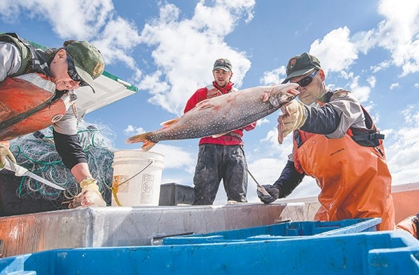 Phil Doepke throws a lake trout into a container after measuring, checking the sex of the fish and looking for tags while Pat Bigelow (left) and Ben Brogie assist. Lake trout were illegally stocked into Yellowstone Lake in the mid-'90s and crews have been working to remove the fish since. Lake trout eat the native cutthroat trout and, if left unchecked, the cutthroats would have disappeared from the lake.