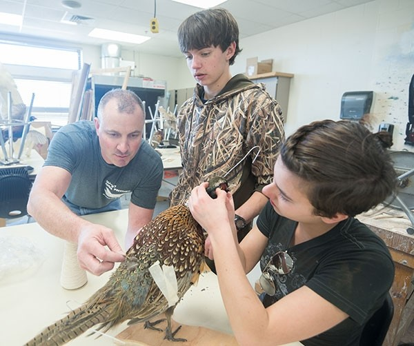 Powell High School art teacher Jim Gilman, recently named the school district's Teacher of the Year, works with students Tate Barhaug (center) and Kathleen Bush on a pheasant taxidermy project Friday afternoon. From taxidermy to a submarine, art students have tackled numerous creative projects under Gilman's guidance. 'Jim has done some amazing things with students and art,' said PHS principal Jim Kuhn.