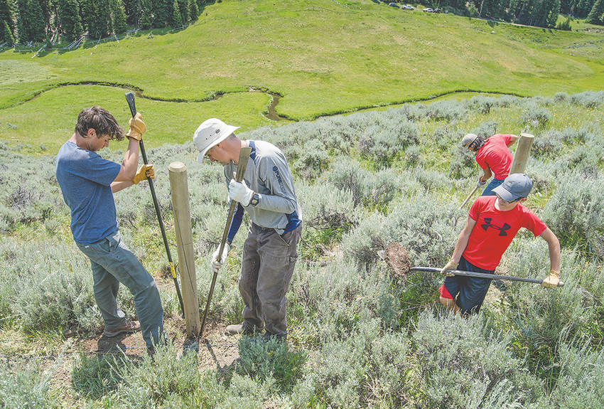 Cody High School sophomore Colton Manchester (left) and teacher Dean Olenik secure a fence post above Soldier Creek in the Bighorn Mountain Range while volunteers Garrett Nelson and Jasper Crofts carry dirt. Volunteers spent three days building the cow fence and will soon plant trees and bushes to provide cover and shade to help protect Yellowstone cutthroat trout in the creek.