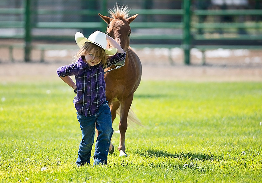 Three-year-old Oakley Kidd of Powell has her hands full, with hat in one hand and horse lead in the other, during the Park County Fair mini horse show Friday. Kidd was a spectator at this show but is an up-and-coming cowgirl on the show scene.
