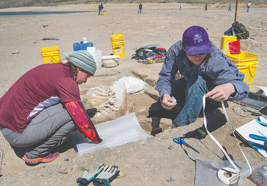 Marcia Peterson (left), assistant Wyoming State Archaeologist, and Brigid Grund, a Powell resident with a doctorate in archaeology, work to preserve a section of Columbian mammoth skeletal remains in a salvage operation at Buffalo Bill Reservoir in April. Four Ice Age era species were found alongside the mammoth remains, identified after scientists took the artifacts back to the lab in Cheyenne.