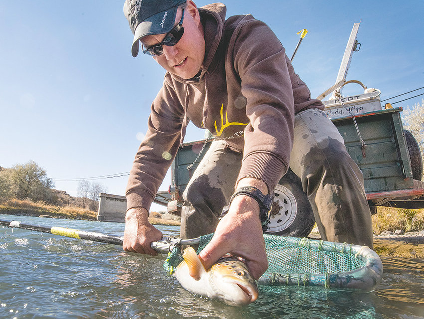 Ben Larsen, Heart Mountain Academy science teacher, brought 12 student volunteers to help with the rescue, but he didn't hesitate to get in on the action, releasing a nice trout at the Corbett Bridge.