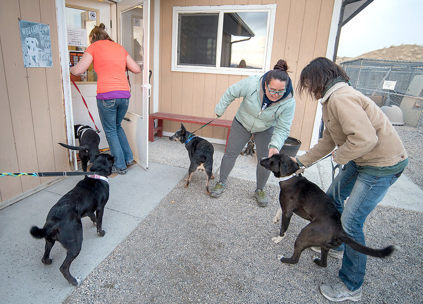 Park County Animal Shelter kennel technician Valerie Swensrud (center) and volunteers Stephanie Tarbett (left) and Cassandra Sorrell (right), welcome four dogs to the shelter on Saturday. The canines were saved from death row in Oklahoma.