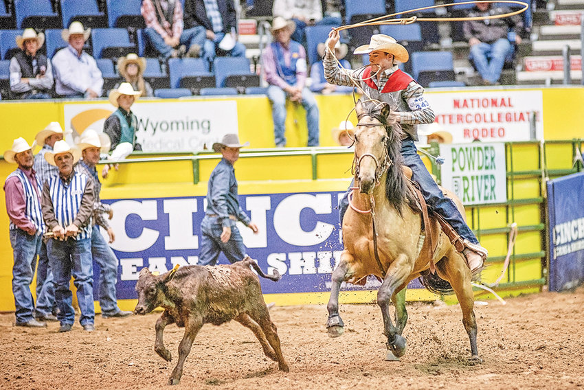 NWC's Caleb McMillan competes in the first round of tie down roping during Monday's action at the College National Finals Rodeo, being held at the Casper Events Center. McMillan missed on his throw, resulting in no points.
