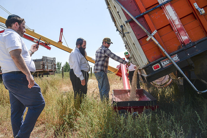 Yaakov Feldman (left) and Rabbi Moshe Feldman supervise as Forrest Smith of GF Harvest dumps oats into an auger. In order for the oats to be used to make shmurah matzah, an unleavened bread eaten by Orthodox Jews during Passover, the entire process of making the bread, from harvest to baking, has to be supervised.
