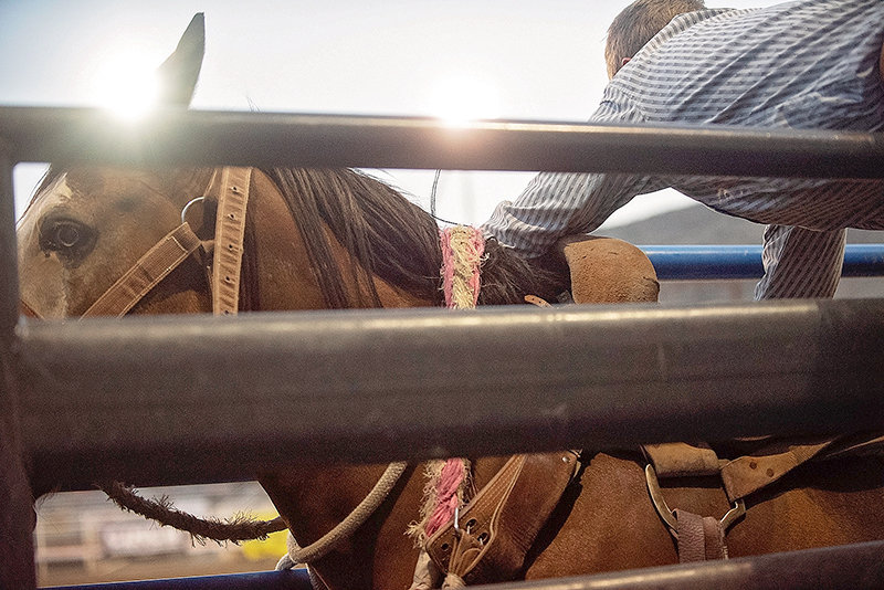 A horse waits to be saddled during the 2018 Trapper Stampede Rodeo, the signature event of the Northwest College rodeo program's season. This year's Trapper Stampede, scheduled for this weekend, has been postponed until Oct. 4-5 due to an outbreak of vesicular stomatitis (VS) in Park County.
