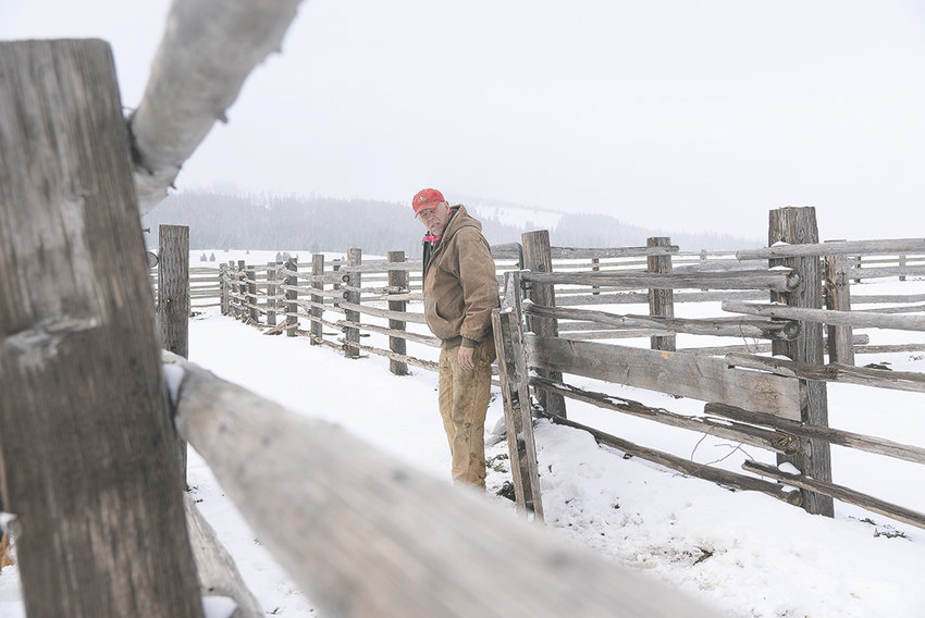 Regan Smith of Powell, owner of Smith Sheep and Stuff, does maintenance on one of the corrals he uses for his sheep farming operation in the Bighorn Mountains last week.