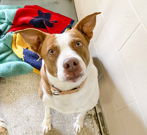 Judy is available for adoption at the Park County Animal Shelter in Cody.
