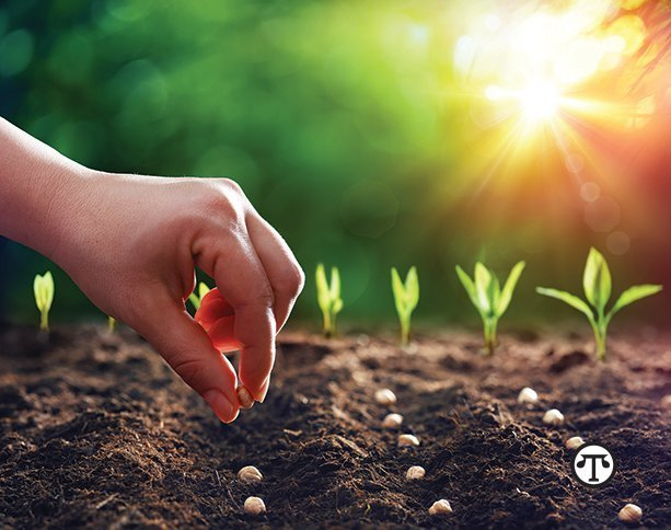 Enjoy planting your garden—just be sure you know the plants come from some place safe.