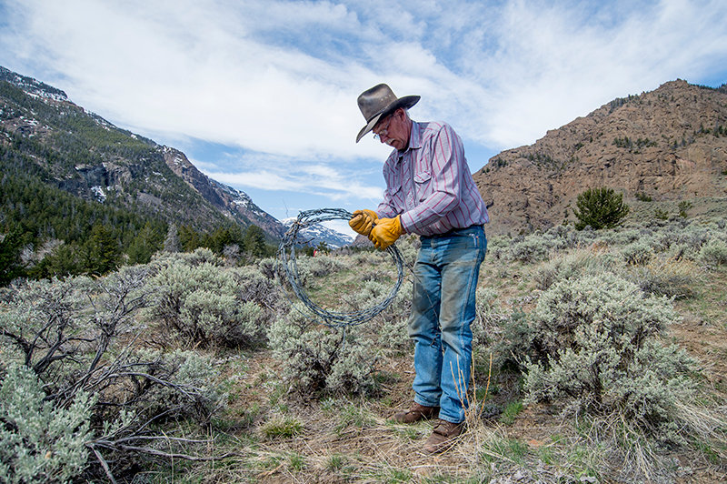 Dale Olson winds up a strand of barbed-wire fence during a mission to remove the obstacle to wildlife migration from an area on the Ishawooa Trail. Olson was the president of the Shoshone Back Country Horsemen at the time of his death on May 28. His wife, Carol, is in charge of recruitment and retention for the group.