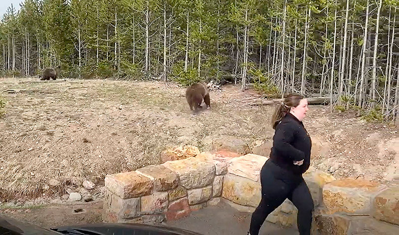 Officials in Yellowstone National Park turned to social media to ask for help in identifying this woman, who was captured on video getting dangerously too close to grizzly bears in May. She has now been charged.