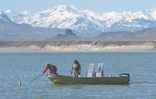Wyoming Game and Fish department fisheries technician Mark Komoroski, volunteer Kris Cooper, of Powell, and Cody Region fisheries biologist Jason Burckhardt work to retrieve one of seven 300-foot gillnets from the east side of Buffalo Bill Reservoir near the South Fork drainage.