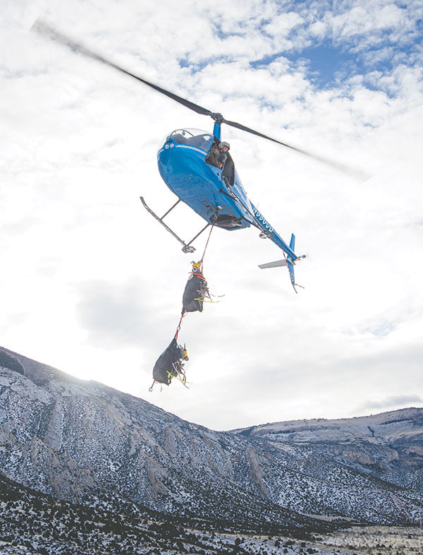 Bighorn sheep are transported by helicopter to the processing area on Monday before being relocated to the Rawlins area by truck. The sheep are captured through gun-netting and then mildly sedated so biologists can perform tests on the animals before shipping them to augment a herd in the Ferris Mountains.