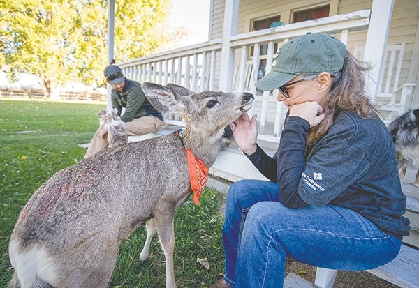 Veesha Murray greets John the three-legged mule deer as her son, Will Littell plays with the dogs on the front porch of their Penrose area home. John was relocated by the Wyoming Game and Fish department after the story of the rescued deer exploded on a popular internet website over the weekend.