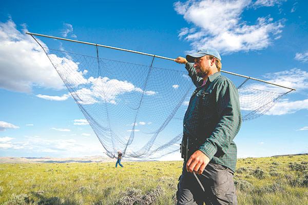 Jay Carlisle, research director of the Intermountain Bird Observatory at Boise State University, and Brian Peters, of The Nature Conservancy's Heart Mountain Ranch Preserve, carry a 60-foot mist net used to capture long-billed curlews for a research study on the birds. Long-billed curlews have been in decline in some areas of Montana, Idaho and Wyoming, but the researchers say that there is a healthy population in northwest Wyoming.