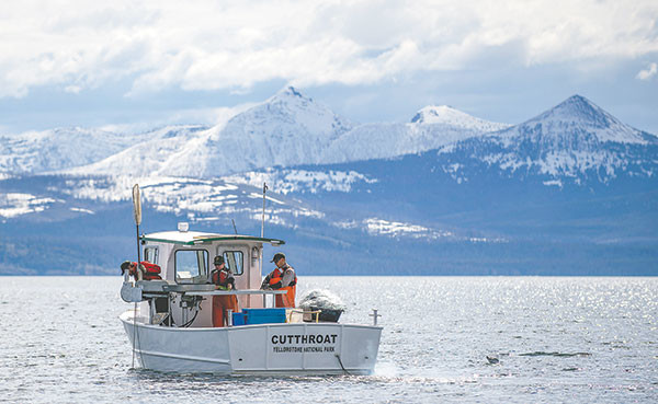 The crew of the Cutthroat, including Ben Brogie, Pat Bigelow and Phil Doepke, troll nets for lake trout, a nonnative species that eats the native cutthroat trout, in Yellowstone Lake.