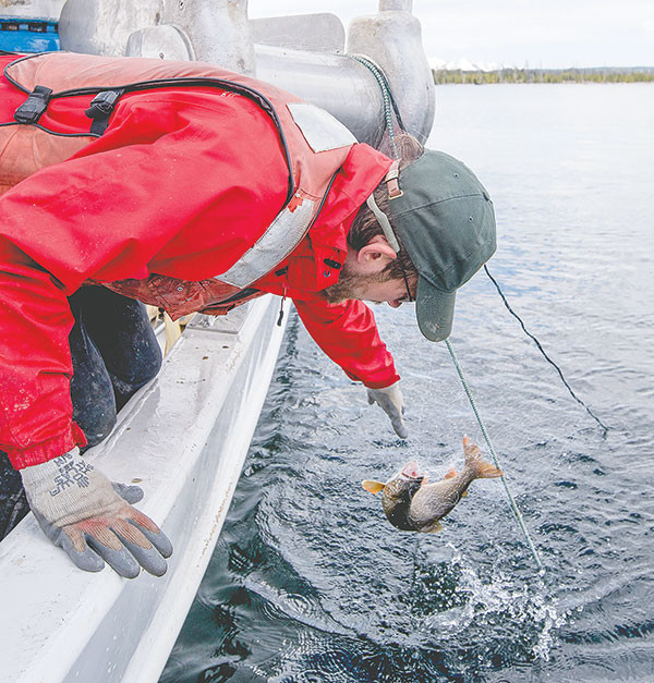 Captain Ben Brogie pulls in a lake trout caught in a net from the deck of the Cutthroat boat.