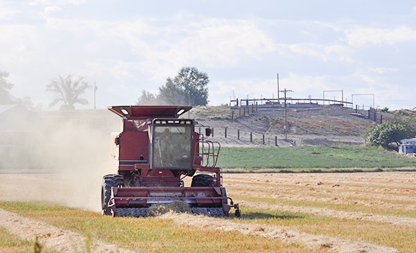 Gluten-free oats are harvested east of Powell in September. Last year, Gluten Free Oats grew more oats locally than ever — 1,200 acres. The majority of those oats are still in storage. The Powell company may not be contracting acreage in 2016, but that decision is not final yet.