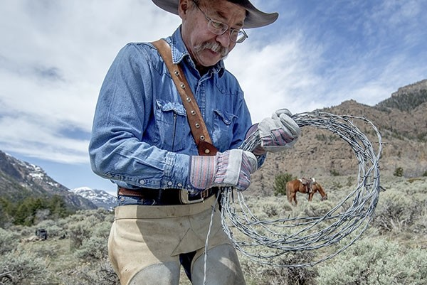 Von Ringler, of Clark, winds barbed-wire fencing while a hardcore team from the Shoshone Back Country Horsemen take out a fence near Ishawooa Creek in the Shoshone National Forest on Saturday. The fence was removed to benefit area wildlife.