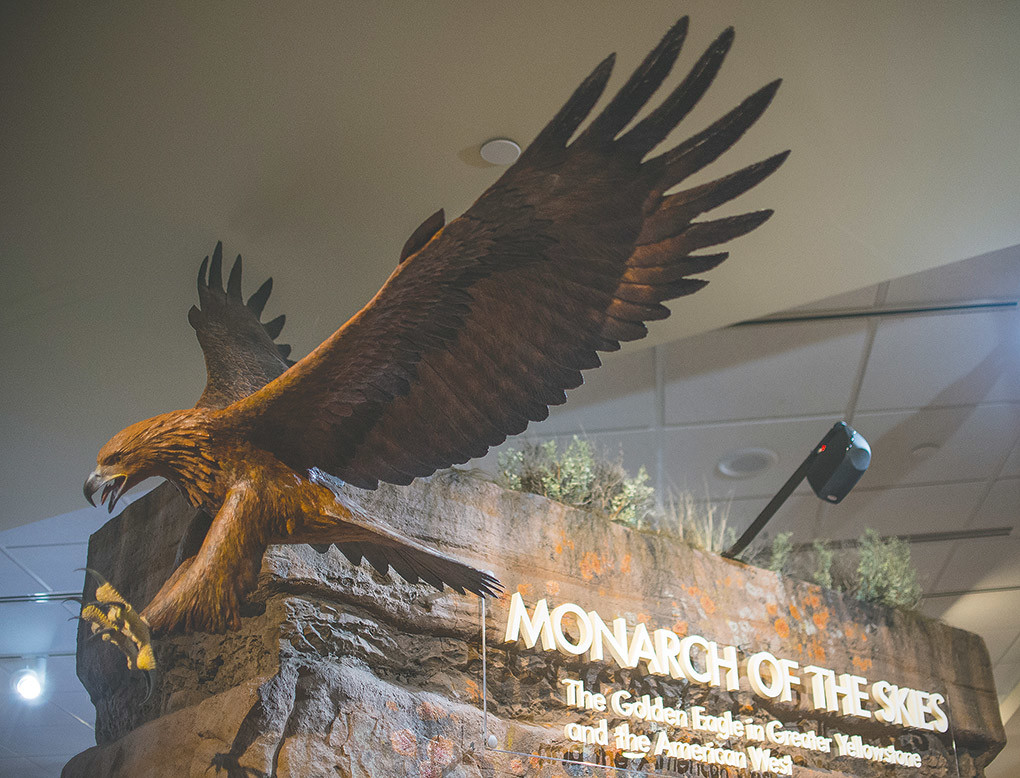 The entrance to Monarch of the Skies, the Draper Natural History Museum's new permanent exhibit, uses a mix of cutting-edge technology for viewer interaction with beautiful displays showing the lifecycle, cultural impact and tools of researchers' trade.