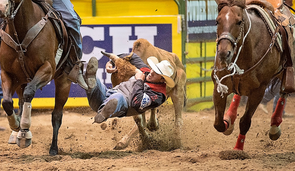 Trapper cowboy Bubba Boots completes a quick head catch on a hefty steer during the June 11 slack rodeo steer wrestling competition. Boots finished 16th in steer wrestling and 18th in team roping.