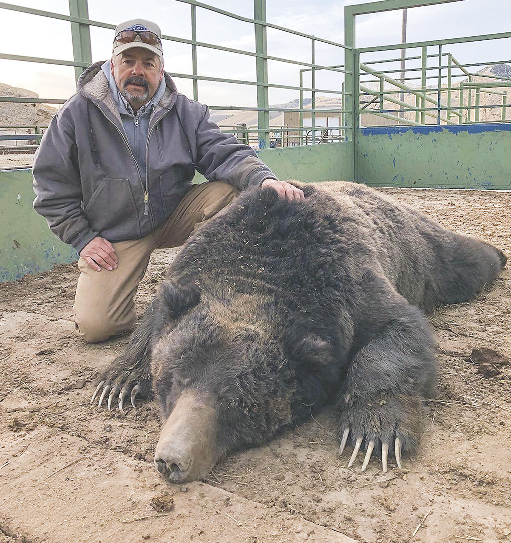 Meeteetse rancher Joe Thomas poses with Big Joe, a grizzly that was euthanized after being trapped on his property.