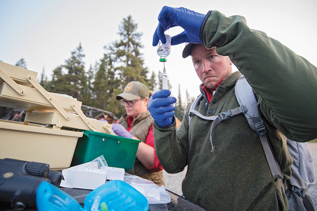Big Horn Basin brucellosis habitat biologist Eric Maichak, of Powell, and wildlife biologist Leslie Schreiber work to gather drugs needed for the capture and testing of a moose to be collared in the Bighorns.
