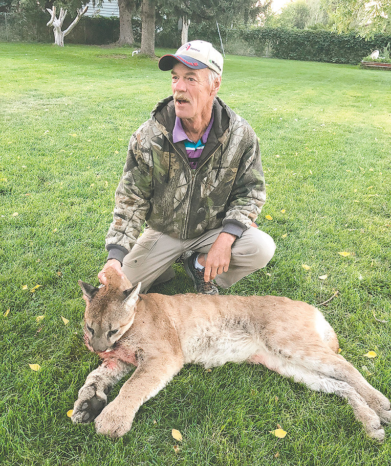 Kevin Lineback poses with a mountain lion he found and killed in his backyard on Tuesday, just south of Powell.