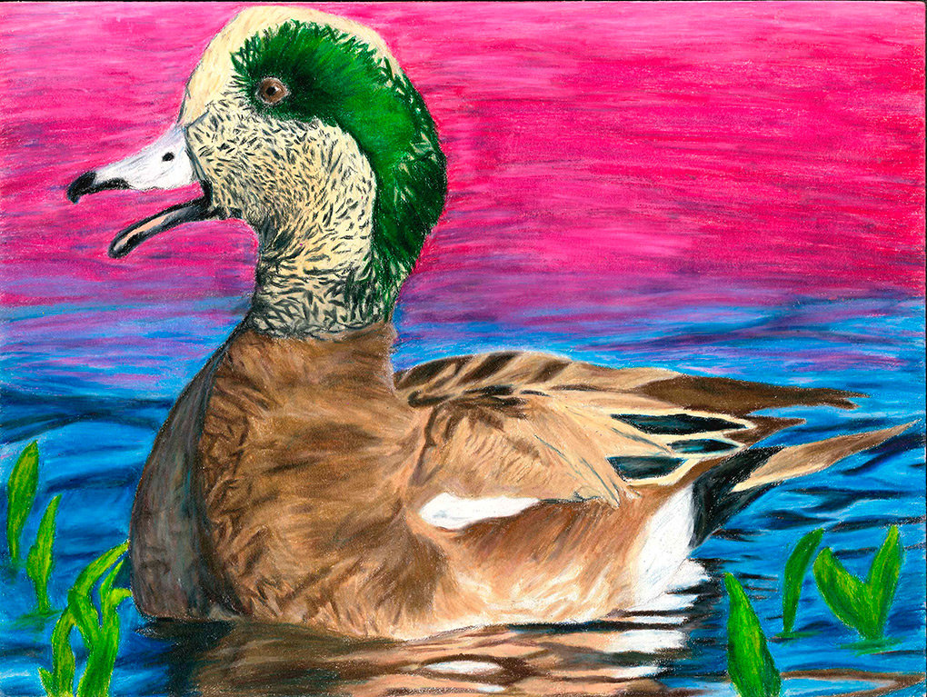 PHS student Jace Bohlman received a first place award in this year's Junior Duck Stamp Program and was a runner up for Best of Show.