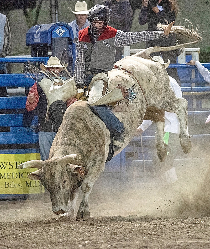 NWC Trapper Caleb McMillan competes in the bull riding event at the Trapper Stampede in Cody in September. McMillan won the all-around at last weekend's MCC Spring Rodeo, while the Trappers won the team title.