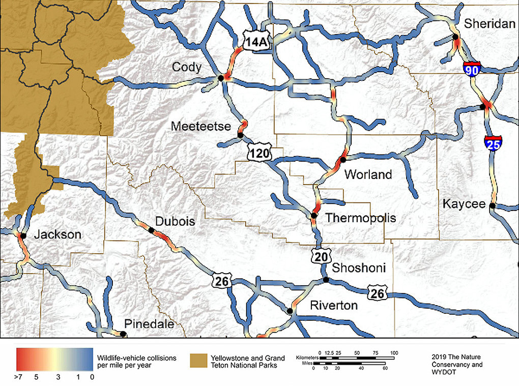 The reddish colored sections of this map highlight areas where drivers have experienced more collisions with wildlife. Park County has a couple sections of highway with a relatively high number of collisions.