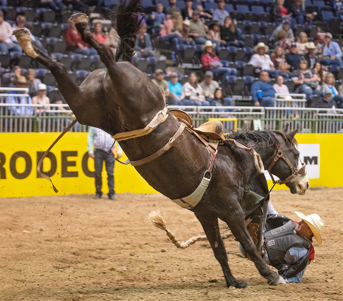 NWC saddle bronc rider Clancy Glenn hits the arena floor after being bucked off by Moonlight.