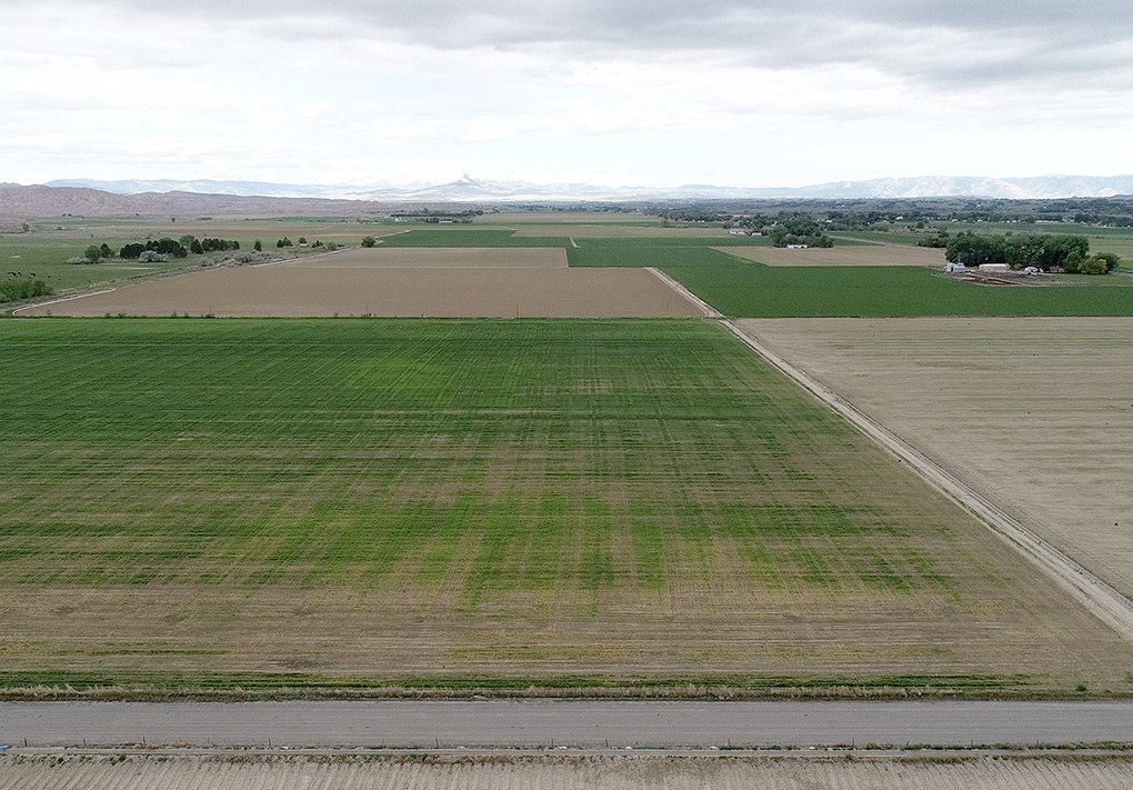 Willwood farmer David Northrup's barley field was accidentally sprayed with herbicides. From the air, the patterns of spraying where the helicopter turned around over Northrup's field can be seen.