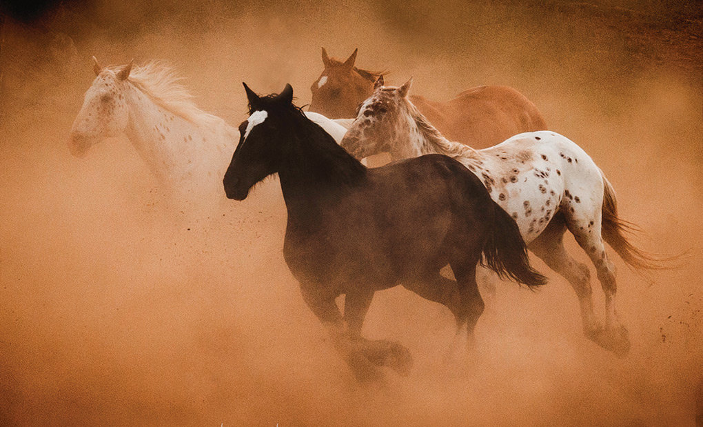 Elaine Haberland of Lost Canyon Photography captured this image of wild horses. She'll lead a Saturday workshop on Western photography at Meeteetse Museums.