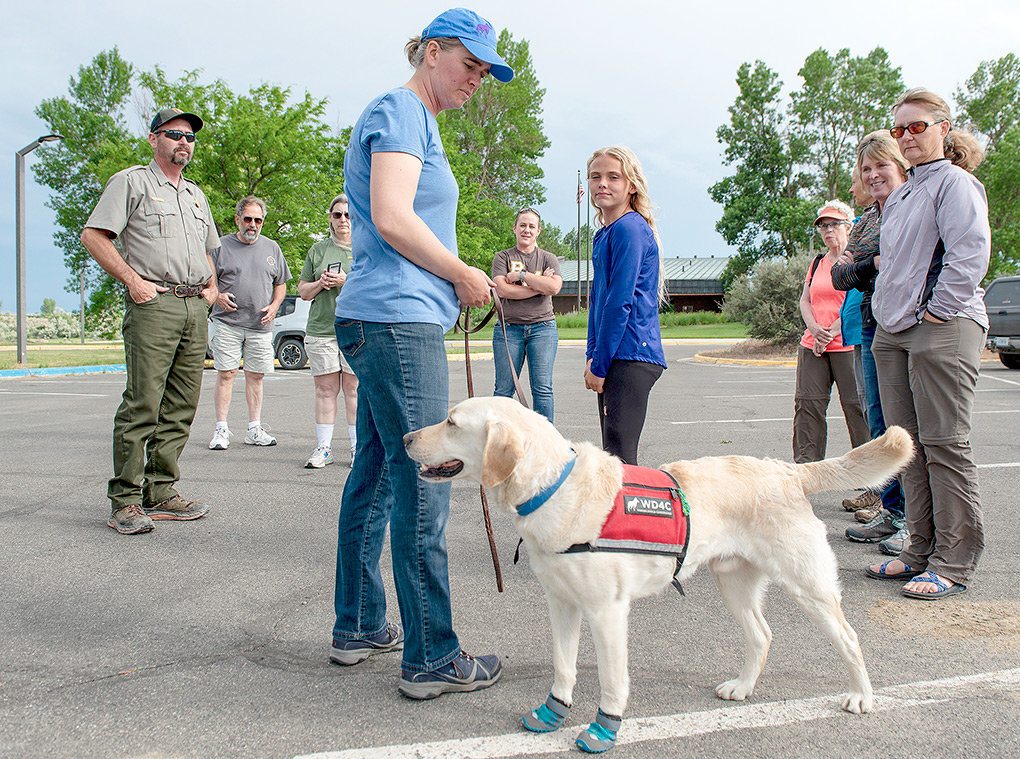 Tobias entertains a crowd of people curious to meet the pups of Working Dogs for Conservation last. The pooches wear booties on their paws to make sure they don't scratch vehicles or boats while searching for zebra mussels.