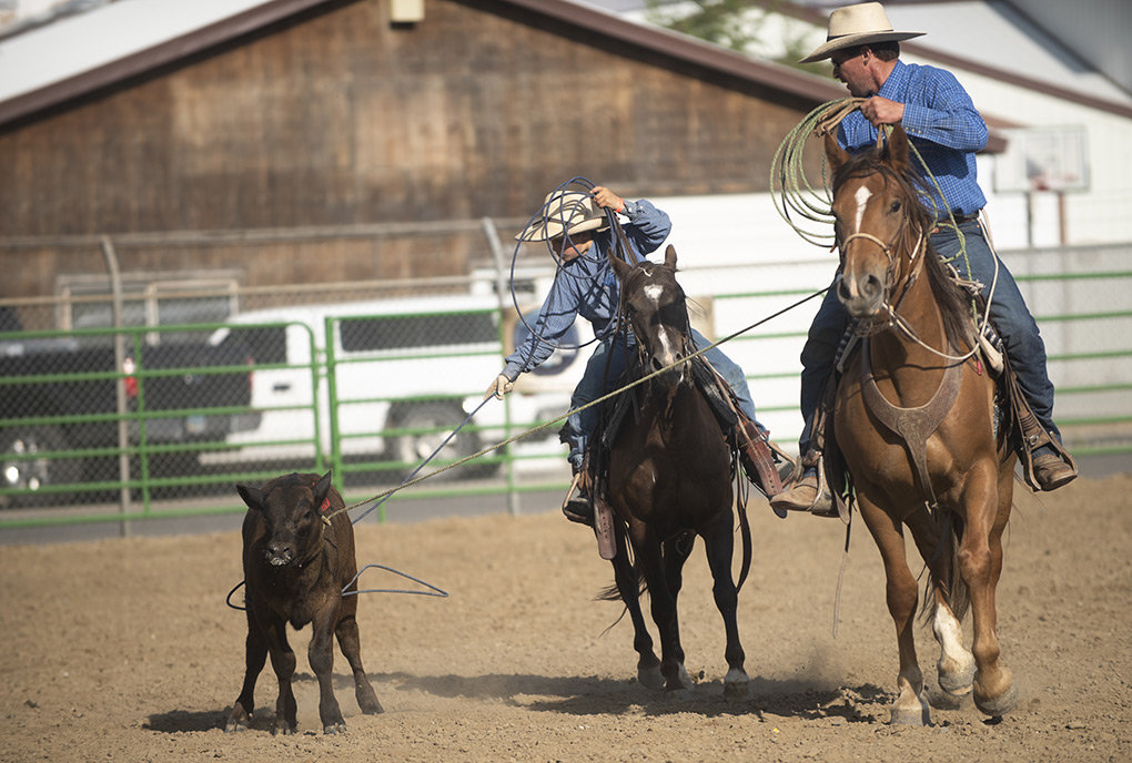 Participants rope a calf during last year's Ranch Rodeo. A dozen teams will compete in the third annual Ranch Rodeo, which kicks off at 5 p.m. Wednesday at the Horse Arena.