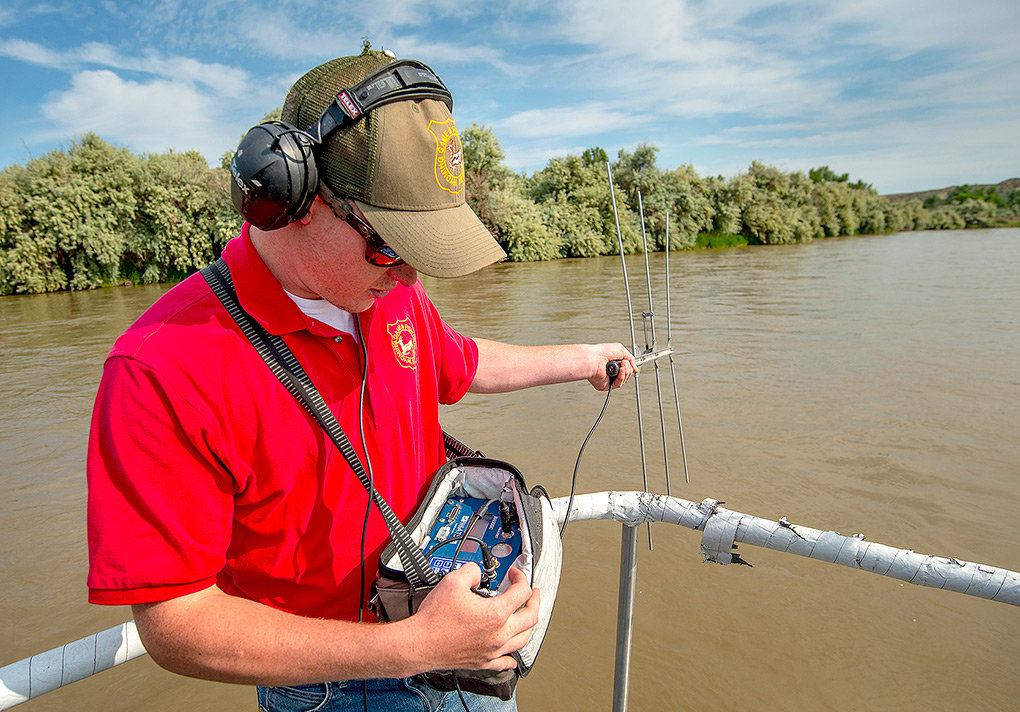 Jake Ruthven, seasonal fisheries tech for the Wyoming Game and Fish Department, tracks sturgeon in the Bighorn River using radio telemetry.