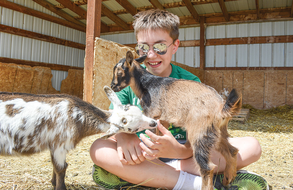 Trenton Kawano — who plans to show nine or 10 goats at this year's Park County Fair — grins while spending some time with a couple of his grandmother's Nigerian dairy goats last week. Kawano enjoys goats' playful personalities, which may be one reason why the species has been gaining in popularity both locally and across the country.