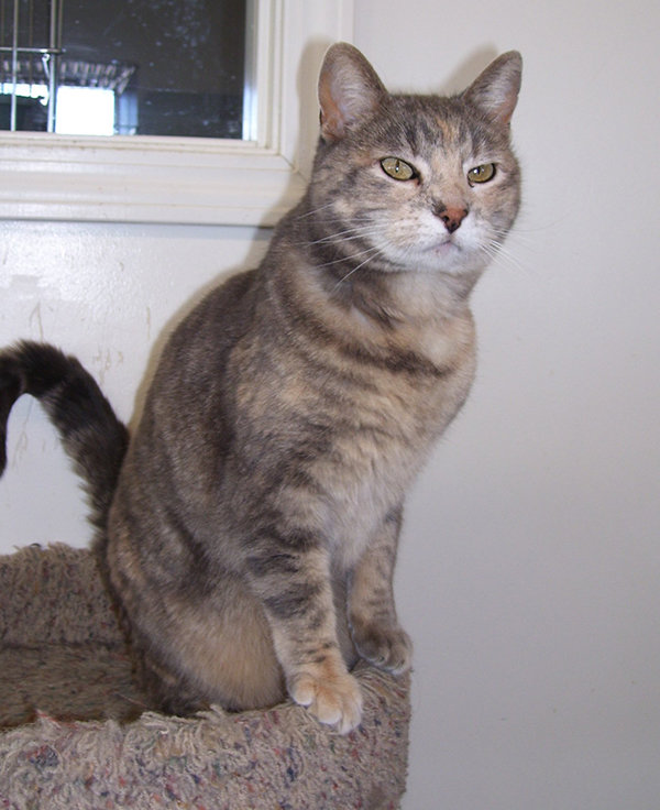 Susie is a cat who has been waiting for a home at the City of Powell/Moyer Animal Shelter.