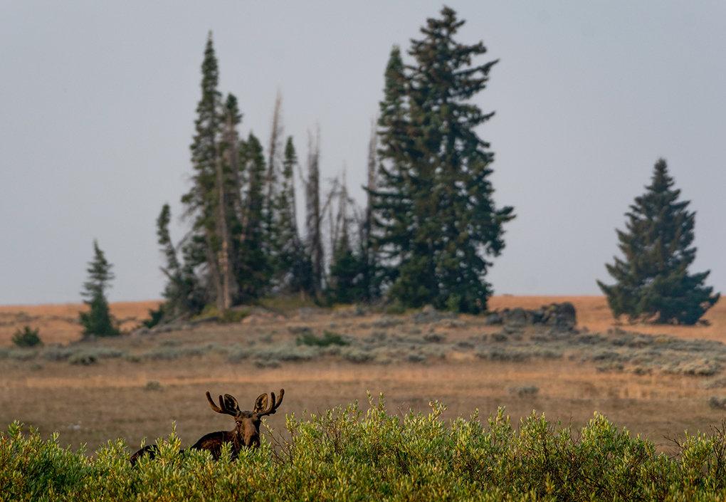 Bighorn forest officials still unsure about summer camping ...