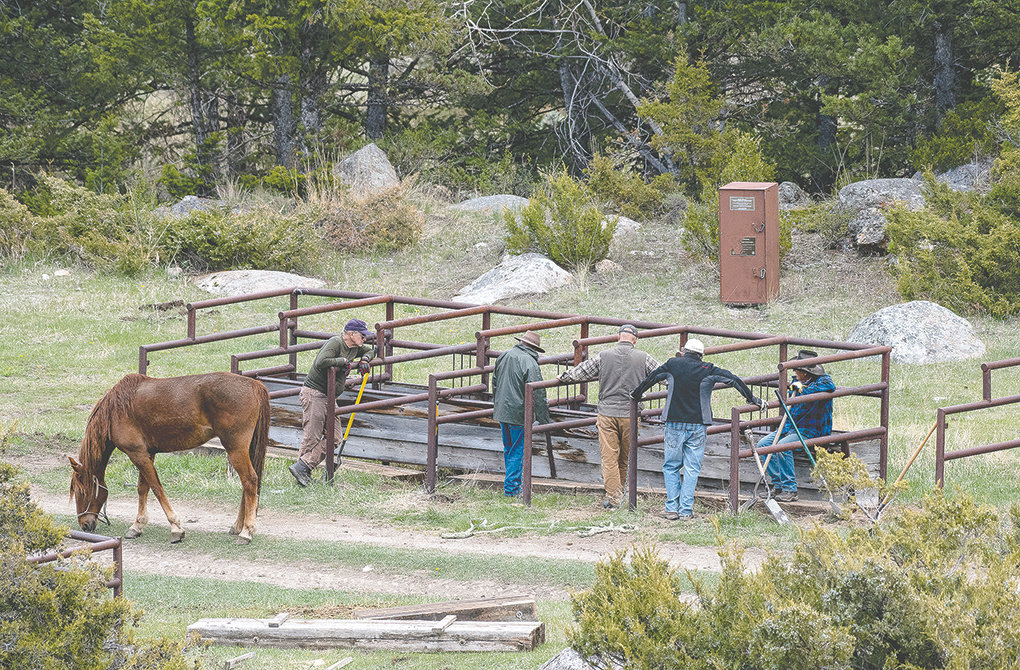 Walter Haslett, Howard Sanders, Bruce Fauske, Bud Melcher and Dale Olson install a floor for stanchions at Dead Indian Campground. The local chapter of the Back Country Horsemen of America clears scores of miles of trail and performs other work in the Shoshone National Forest each year.