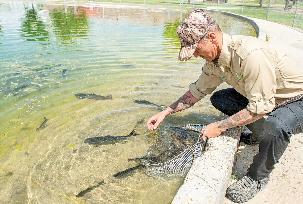 Shane Allen stocks the cement pond at Homesteader Park in preparation for Kids' Fishing Day on June 6. It's a free fishing day in Wyoming.