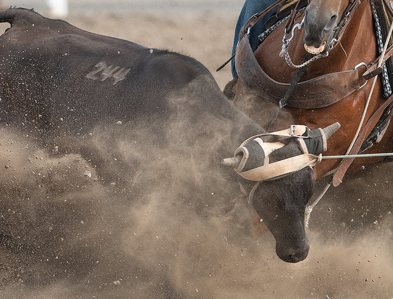 The PRCA-sanctioned Cody Stampede Rodeo ran from July 1-4, featuring scores of competitors across nine different events.