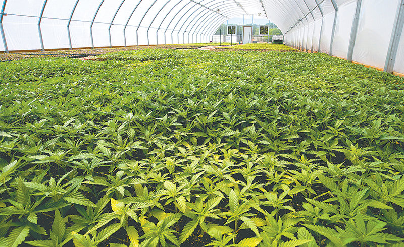 GF Harvest and Mother's Hemp Farms have been among the state's pioneers in the fledgling hemp industry, with owner Dale Tenhulzen hoping to become the state's largest hemp processor. However, earlier this month, Tenhulzen ran into trouble with the Securities and Exchange Commission in connection with another one of his businesses, the Live Wealthy Institute. The SEC says Tenhulzen sold unregistered securities and without the appropriate license.