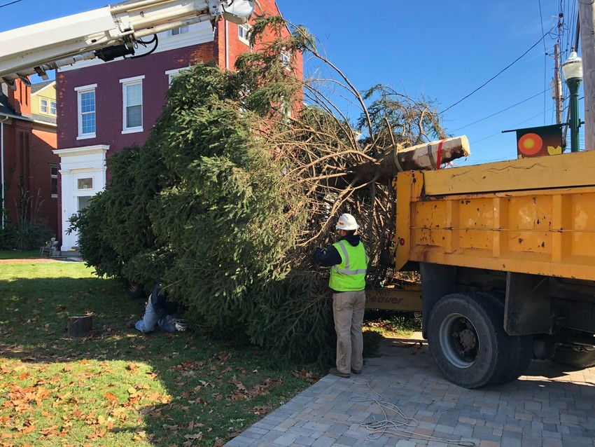 The tree is ready to put in place.