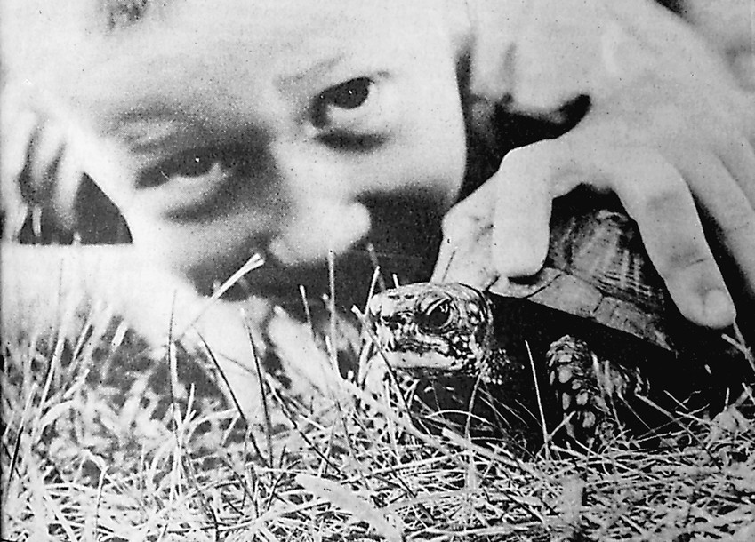 "Mid-age mutant box turtle: With the claws missing off one leg of a yet-to-be-named box turtle, ""Nameless"" has become the summer friend of 6-year-old Shaun Miller. Shaun has two turtles thanks to grandpa Charles Zito, one of which laid two eggs recently. Before Shaun realized the male turtle would eat the eggs, the eggs were gone."