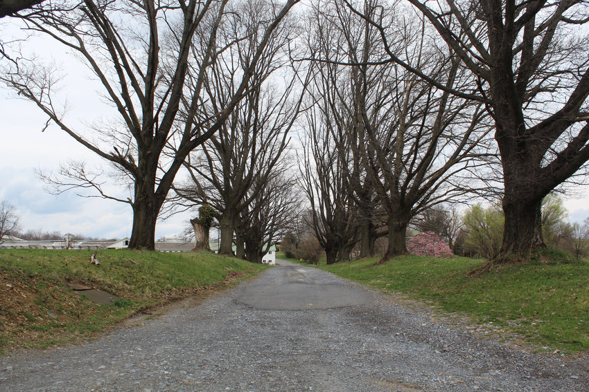 This lane heads back to the Williams farm property.